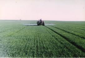 وزير الزراعة: تنفيذ 70% من خطة زراعة القمح