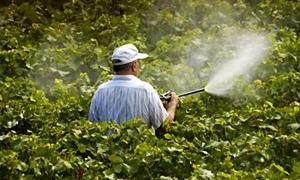 وزارة الزراعة: 65% إجمالي كمية المبيدات المستوردة في 2013