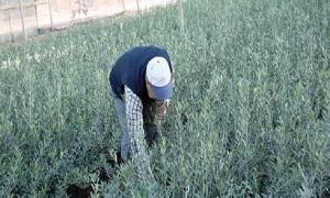 منشأة الحرية توقع عقداً للتحول إلى الزراعة العضوية بـ400 مليون ليرة