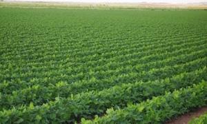 الزراعة تعد خريطة حراج لريف دمشق