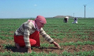 صندوق الجفاف يرصد 1.3 مليار ليرة لتعويض الفلاحين المتضررين العام الجاري