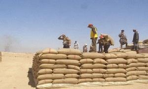 لصرف قيم الحبوب التي تم تسويقها.. تحويل 1.2 مليار ليرة لفرع الحسكة