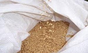 تراجع إيرادات شركة الصوامع الحبوب 81% خلال النصف الأول
