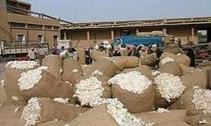 نحو 36 مليار ليرة أضرار مؤسسة المحالج وتسويق الأقطان