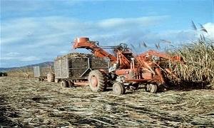 معالجة المخلفات الزراعية والحيوانية تنتج 4.6 مليار متر مكعب من الغاز