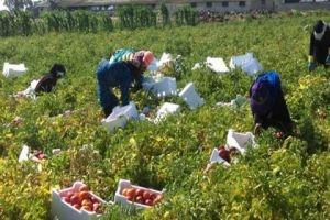 مزارعو درعا يشكون نقص مستلزمات الانتاج وارتفاع تكاليفها وسوء توزيع المقنن العلفي
