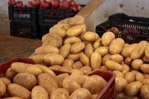 البطاطا المحلية إلى الأسواق قريباً...و 360 ألف طن الإنتاج المتوقع
