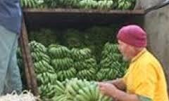 سورية توقف استيراد الموز من لبنان