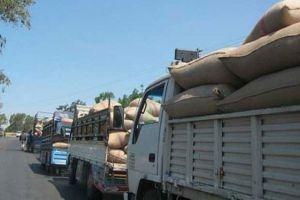 تسويق 32932 طنا من القمح المسوقة بحماة
