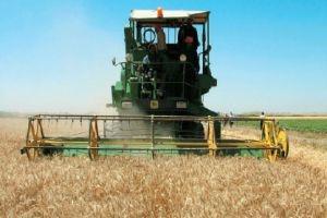الحكومة تحدد سعر شراء القمح من الفلاحين بـ100 ليرة سورية و75 للشعير