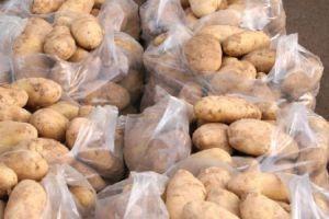 اتحاد الفلاحين يطالب بوقف استيراد البطاطا لهذه الأسباب