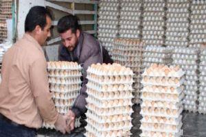 في تناقض عجيب..أسعار البيض ترتفع والفروج تنخفض