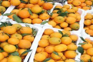 وزارة التجارة تقترح (حل غريب) لتسويق الحمضيات .. بسطات وأكشاك عصير