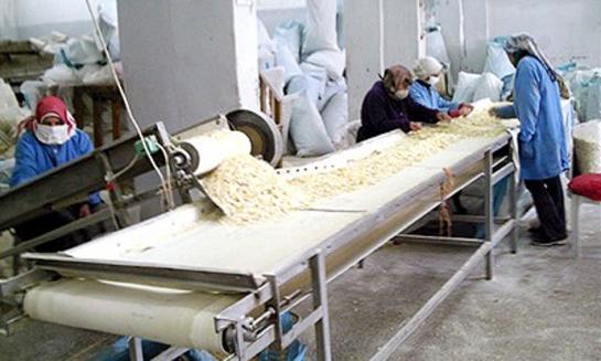 670 طنا انتاج شركة تجفيف البصل والخضار  في السلمية