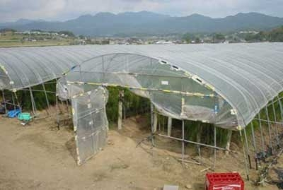 وزارة الزراعة تدعو المزراعين لاستخدام شبكات الري بالرذاذ فوق الغطاء البلاستيكي