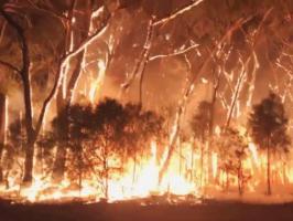 حرائق استرالياً تكشف أقدم نظام مائي