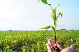وزير الزراعة: دراسة للتأمين على المحاصيل الزراعية بشكل كامل