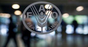 منظمة فاو: أسعار الغذاء العالمية انخفضت 1.6% فى نوفمبر