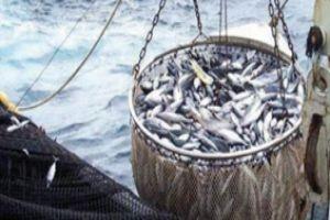 هيئة الثروة السمكية تكشف عن إجراءات مشددة لمنع الصيد الجائر