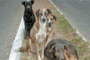 في طرطوس...الكلاب تعض 207 أشخاص