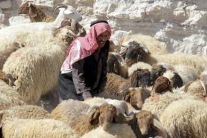 خسائر سورية من الثروة الحيوانية بلغت 6 ملايين رأس