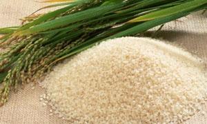 شحنات كبيرة من الرز والسكر في المرافئ قريباً