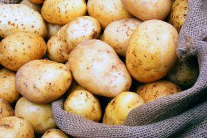 سورية ستبدأ بتصدير البطاطا إلى الأسواق الإيرانية قريباً