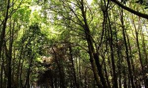 مشروع حرائق الغابات يختتم أعماله بانجازات هامة