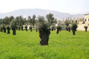 الزراعة: خسارة 7,2 ملايين شجرة في ريف دمشق