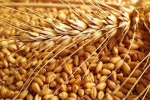 مقايضة بين القمح الروسي والخضار والفواكه السورية