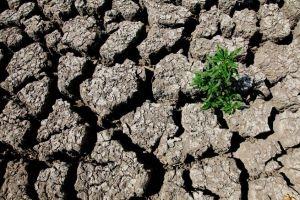 تضرر 1325 مزارعا في ريف دمشق وتعويضهم بـ93 مليون ليرة