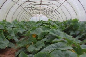 الحكومة تعد المزراعين بدعم كافة المحاصيل الزراعية
