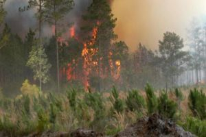 تسجيل 189حريقا زراعياً وحراجياً في سورية..والهدف الحصول على الفحم!