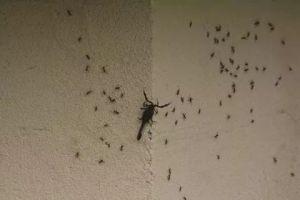 محافظة دمشق: لا وجود للعقارب..وهناك مشكلة برش المبيدات بريف دمشق