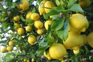 في أسواقنا..الليمون الحامض بـ4600 ليرة والثوم بـ6 آلاف ليرة