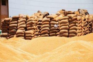 مؤسسة الأعلاف تعلن عن مناقصة خارجية لاستجرار الشعير والذرة وفول الصويا