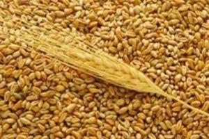 وصول 3 بواخر إلى سورية تحمل 46 ألف طن من القمح