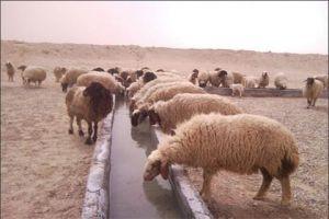 المتاجرة بالأعلاف بالسوق السوادء وغلائها تهدد الثروة الحيوانية في سورية