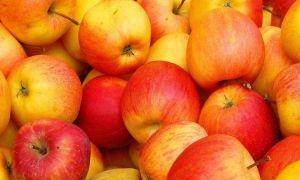 حمص تحتل المركز الأول بإنتاج التفاح في سورية