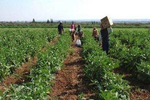 إعادة النظر بالخطة الزراعية في دمشق وريفها بناء على نسبة الهطلات المطرية