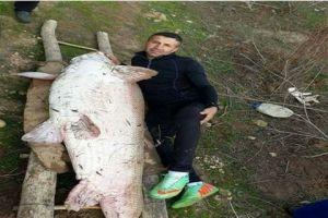 باعها بـ225 ألف ليرة...شاب من الحسكة يصطاد سمكة وزنها 120 كيلو غرام من نهر دجلة
