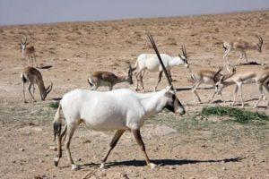 مراعي البادية السورية تدهور مستمر وتراجع للتنوع الحيوي فيها!