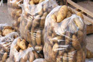 توقعات بانخفاض أسعار البطاطا.. ووصول 5 آلاف طن إلى مرفأ طرطوس