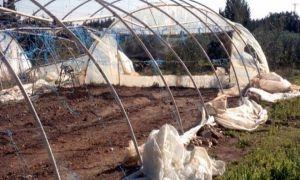 بسبب الرياح والصقيع..5.7 مليارات ليرة أضرار المحاصيل الزراعية في طرطوس
