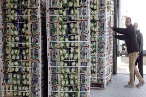 غرف الزراعة: زيادة التصدير لا تعني زيادة الأسعار
