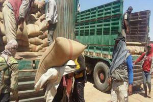 اللجنة الاقتصادية تحدد مبيع بذار القمح بـ180 والشعير بـ150 ليرة