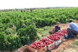 الفلاحون يكشفون لرئيس الحكومة مشاكل القطاع الزراعي