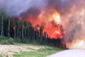 غابات مصياف تلتهم بالحرائق المفتعلة