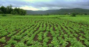 زيادة المساحة المخصصة للزراعة العضوية إلى 35 ألف هكتار