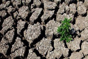 صندوق الجفاف يمنح المتضررين أكثر من مليارَي ليرة منذ إحداثه